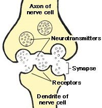 neurotransmitters-and-alcohol